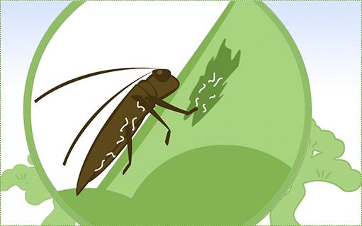 線虫がカミキリ体内から健康な松に乗り移る