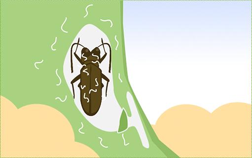 カミキリに線虫が乗り移る