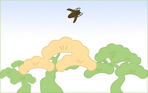 カミキリの成虫が枯れ松から脱出する