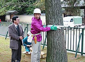 松を守る支援活動