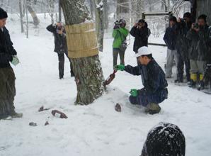 毛越寺の松を守る