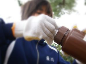 鹿児島県 奄美大島のリュウキュウマツを守る(1)